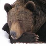熊蟄穴〜くまあなにこもる〜 2014年二十四節気七十二候