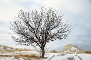 tree-235414_1280