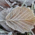 地始凍〜ちはじめてこおる〜 2014年二十四節気七十二候