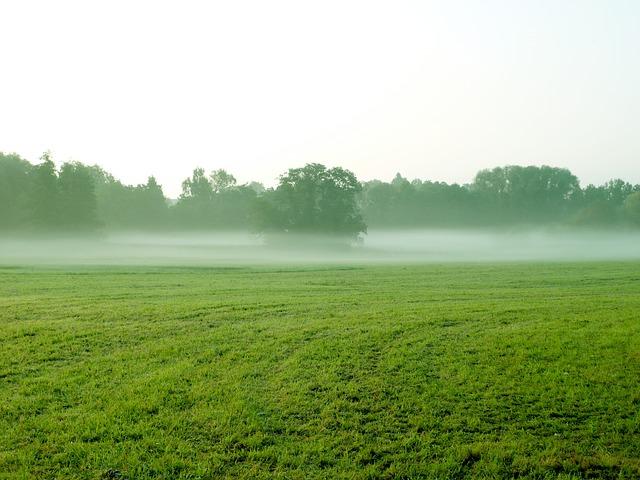 fog-573637_640