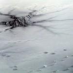 魚上氷〜うおこおりをはいずる〜 2015年二十四節気七十二候