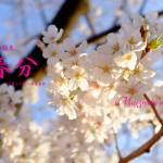 春分(しゅんぶん) 2015年二十四節気七十二候