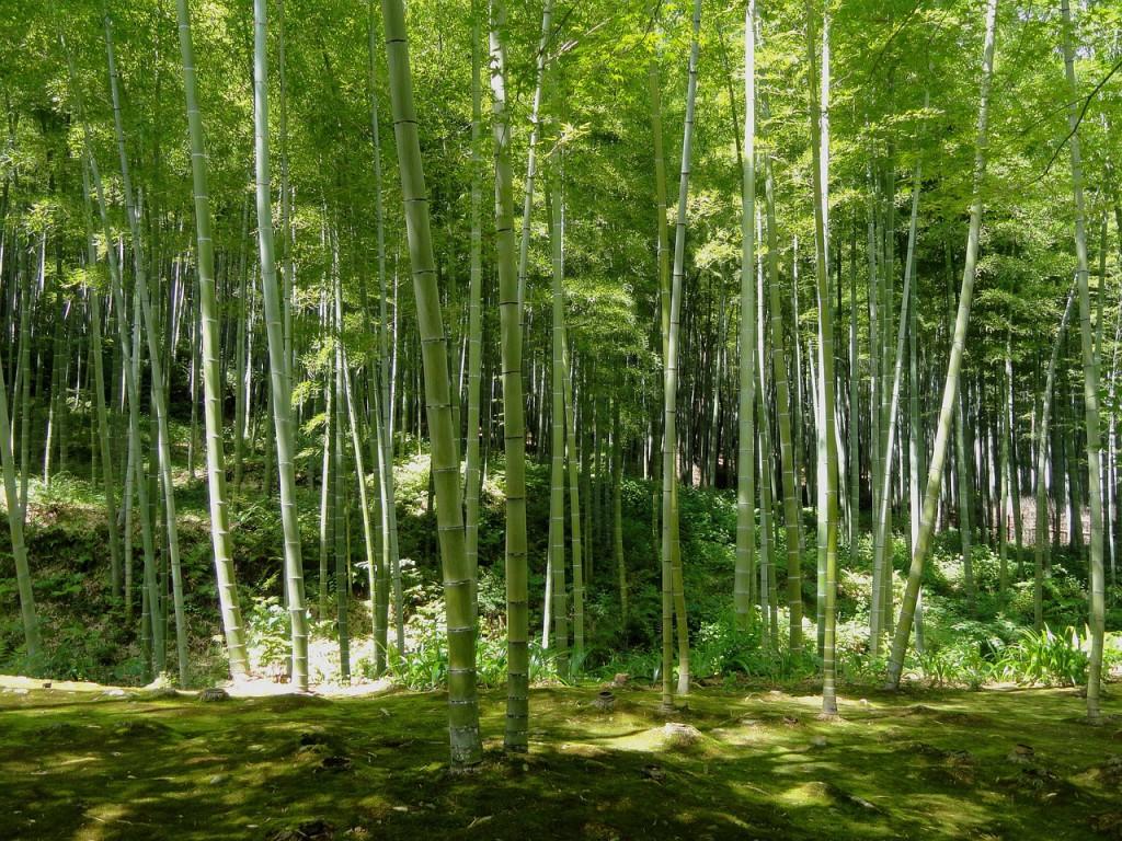 kyoto-106056_1280