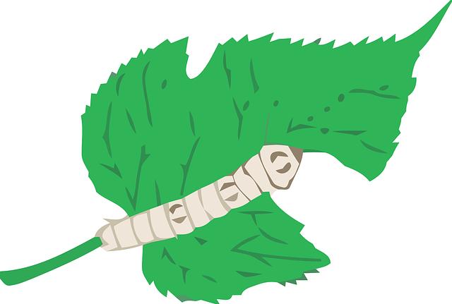 leaf-41641_640