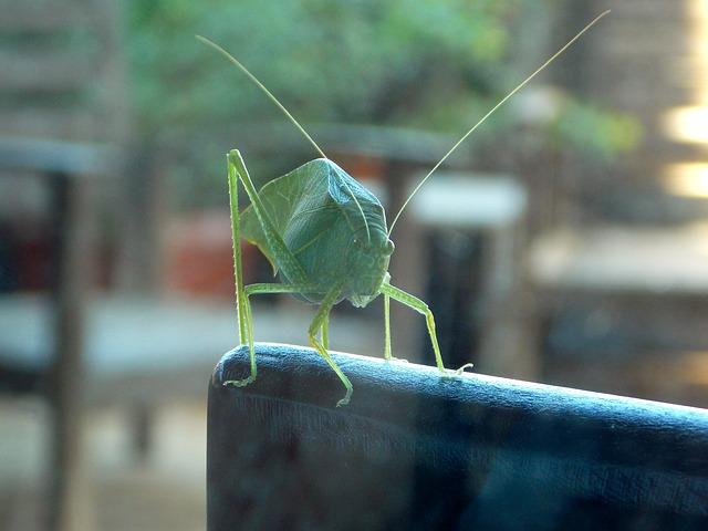 cricket-649234_640
