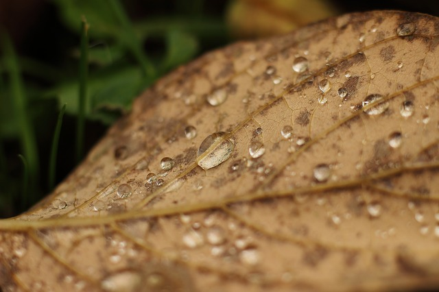 leaf-507022_640