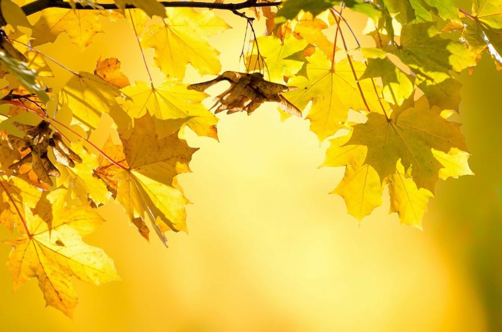autumn-220111_1280