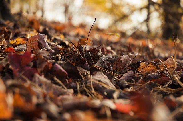 autumn-539811_640