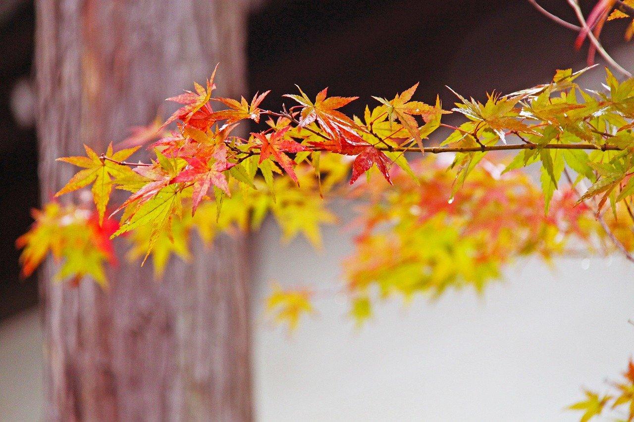 fall-249558_1280