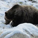 熊蟄穴〜くまあなにこもる〜 2015年二十四節気七十二候