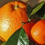 橘始黄〜たちばなはじめてきばむ〜 2016年二十四節気七十二候