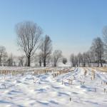雪下出麦〜ゆきわたりてむぎのびる〜 2016年二十四節気七十二候