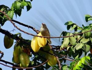 leaf-warbler-300529_1280