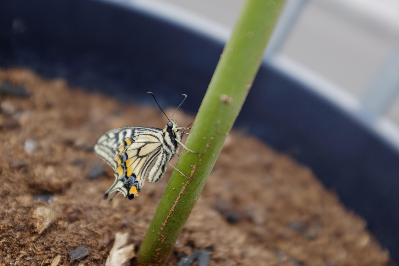 蝶々 の 数え 方