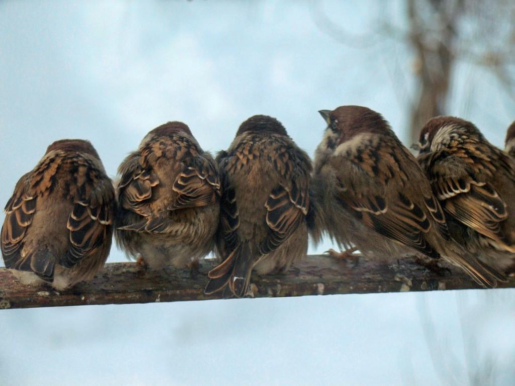 birds-928572_1280