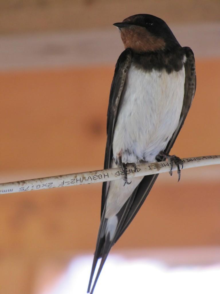 bird-395678_1280