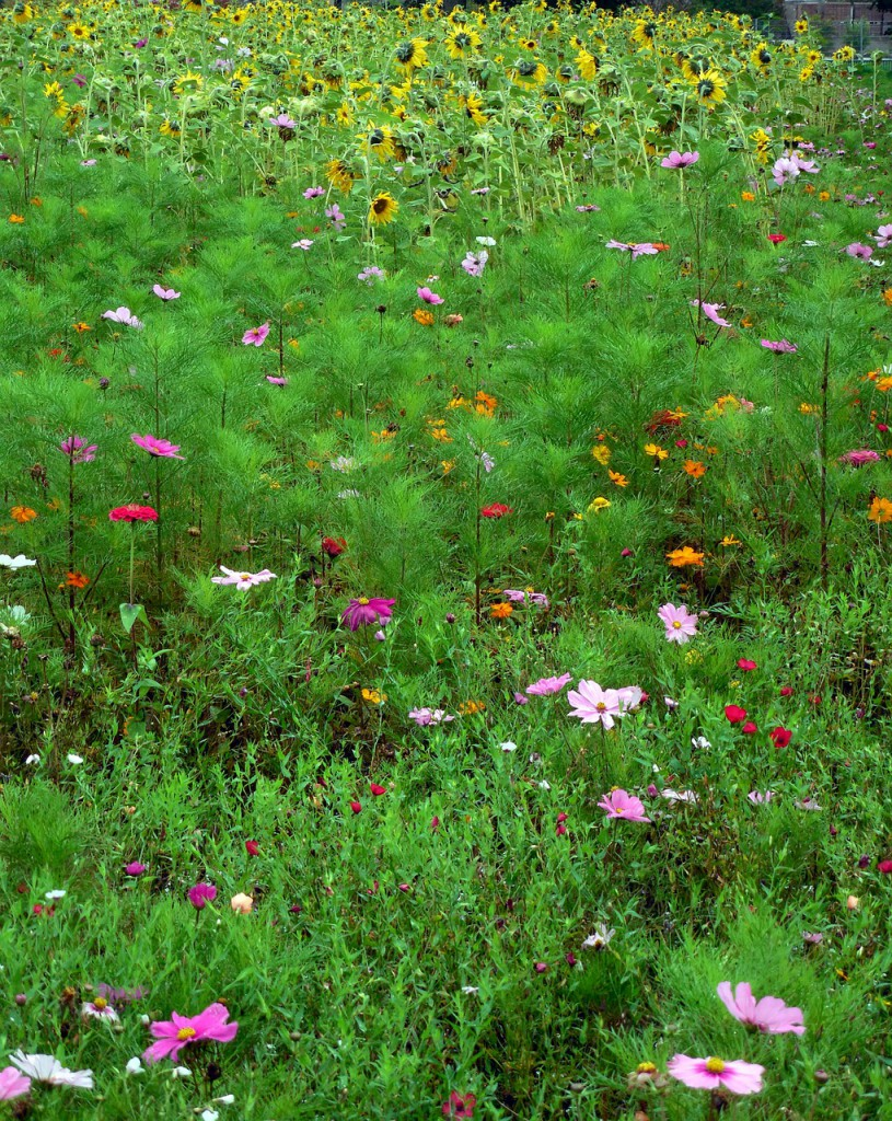 meadow-455279_1280