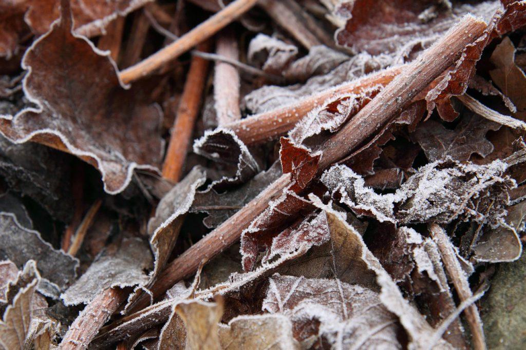 autumn-15969_1280